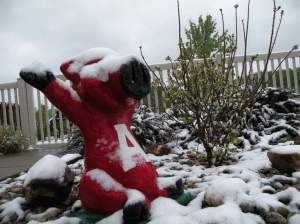 Statue of Ark Razorback with snow on it in May.